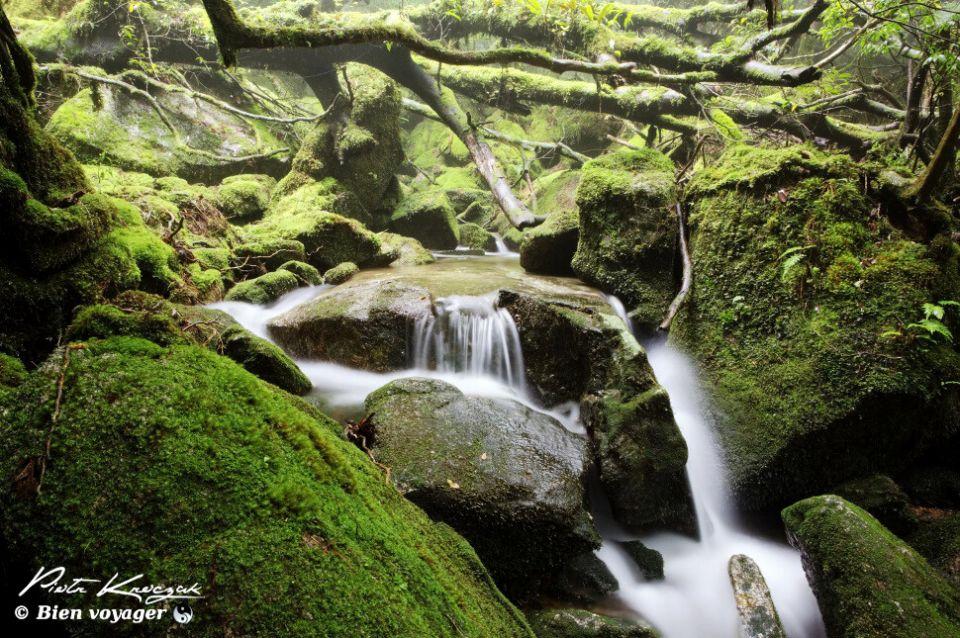 Forêt de Yakushima au Japon