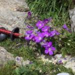 9 bonnes raisons pour utiliser des bâtons en randonnée