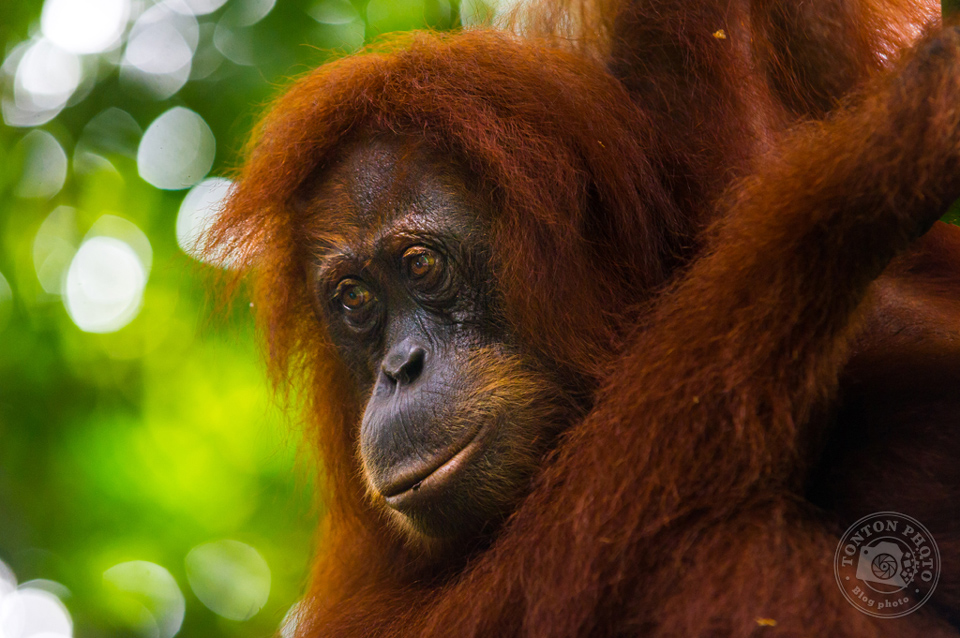 Voyage en cours : Trek dans la jungle de Sumatra