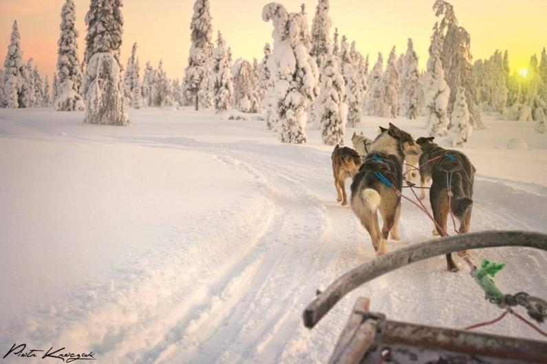 chien-de-traineau-finlande-Piotr Kroczac