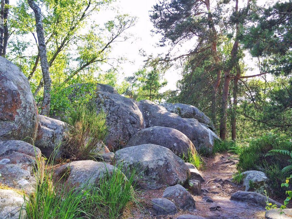 Rocher Canon Foret de Fontainebleau