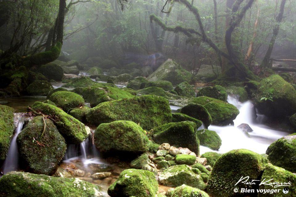 Balade dans la forêt primaire de Yakushima au Japon